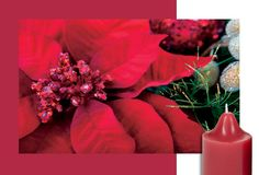 Poinsettia & Musk #PartyLite http://www.partylite.com/en-us/whatsnew/homefragrance/ProductDetails.aspx