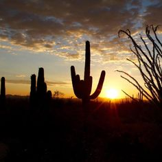 Tucson | Arizona | Sunset | Photo via Instagram by merjakp | http://www.visittucson.org/