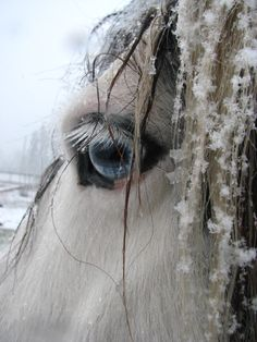a winter horse w/fairy dust + pools of magic in her eyes