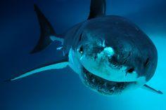 la-me-ln-six-california-shark-attacks-2014-20150126 (2048×1363)