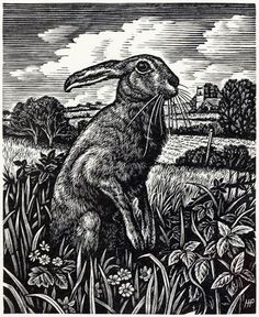 March Hare by Howard Phipps  Wood Engraving 8 x 6.5cm