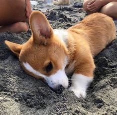Shared by Mariana. Find images and videos about -puppy, animal and dog on We Heart It - the app to get lost in what you love.