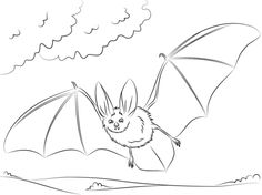 Townsends Big Eared Bat Coloring Page