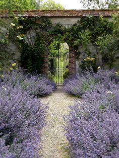 lavender walk to the secret garden Beautiful Flowers Garden, Beautiful Gardens, The Secret Garden, Garden Cottage, Garden Gates, Dream Garden, Garden Inspiration, Landscape Design, Path Design