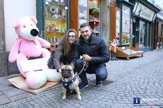 French Bulldog, Mousse, Dogs, Events, Animals, Dessert, Pet Dogs, Christmas, Animales