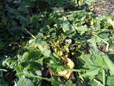 Mulchen in de natuurlijke tuin: De Seizoenen Hebben Het Perfect Geregeld!