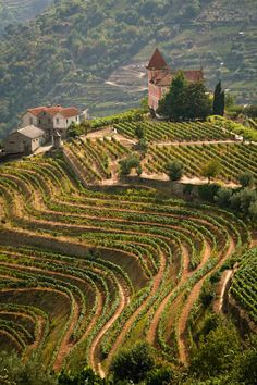Do not miss visiting the gorgeous vineyards of the Douro Valley in northern Portugal! Here's a full guide to help you enjoy this region! #portugal #dourovalley #dourowine #dourovineyard
