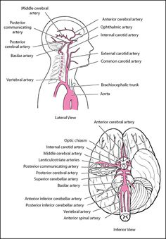 Tympanic membrane (TM): pars flaccida (superior to