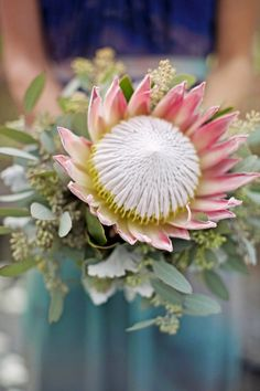 A single bloom bouquet is a cool idea because it's affordable, it reflects the minimalist trend and looks original! Such a bouquet is an interesting idea for a bride, and I think, the best idea for the bridesmaids – it will save you lots of money! Protea Wedding, Fall Wedding Flowers, Wedding Flower Inspiration, Floral Wedding, Wedding Ideas, Fall Flowers, Bouquet Wedding, Flor Protea, Protea Bouquet