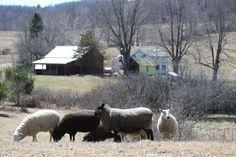 The Meaning Of Bedlam Farm by Jon Katz - Bedlam Farm