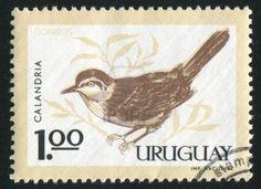 URUGUAY - CIRCA 1963: stamp printed by Uruguay, shows Chalk-browed
