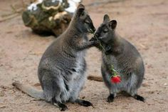 The 25 Most Romantic Animals That Ever Lived Animals And Pets, Baby Animals, Funny Animals, Cute Animals, Animal Funnies, Cute Creatures, Beautiful Creatures, Romantic Animals, Mundo Animal