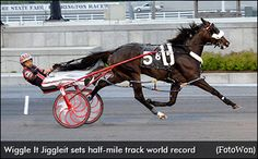 World Record For Wiggle It Jiggleit | Standardbred Canada