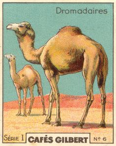 camel coffee card (260+ images of misc themes)