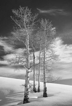 winter / black and white photography / the trees stand alone. Winter Szenen, Winter Magic, Winter White, Winter Trees, Snowy Trees, Birch Trees, All Nature, Flowers Nature, Snow Scenes