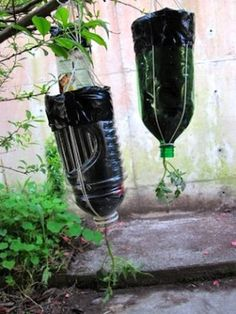 Upside-Down Tomato Planter  Just save your plastic soda bottles, cut the bottoms off, ease in a tomato plant seedling, and pour in some earth. Then hang it up, water it regularly, and watch your tomatoes grow! This also works well for herbs and peppers.)