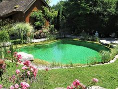 Natural Swimming Pools, Swimming Pool Designs, Aesthetic Collage, Cool Pools, Water Features, Backyard Landscaping, Landscape Design, Pond, Pergola