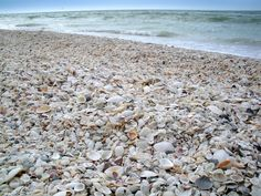 Looking for a restful and unique Florida vacation? Our family had a wonderful time shelling on Marco Island, Florida.
