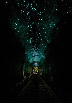 Glow Worms in abandoned train tunnel in Helensburgh, New South Wales, Australia (Photo: David Roma) Abandoned Train, Abandoned Places, Derelict Places, Train Tunnel, Australia Photos, Australia Funny, Lost, Train Tracks, Glow Worms