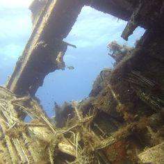Giannoula K. Shipwreck, Fish, Awesome, Beautiful, Instagram