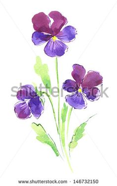 Watercolor violet pansies flowers