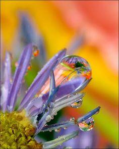 Macro Flower Dewdrops - ©Amery Carlson www.flickr.com/... (via Digital Photography School)