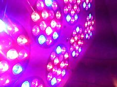 When you are living in a hot area, then you would want to use LED grow light as they do not give lot of heat. It does not make the area warm.
