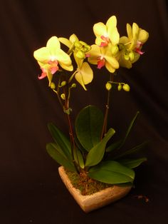 Yellow orchid plant.  To view our entire selection please visit us at www.starflor.com #flowers #events #eventdecor