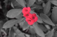 Photoshop Effects, Flowers, Plants, Color, Florals, Plant, Colour, Flower, Colors