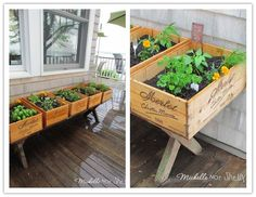 Refurbished wine box above ground herb garden