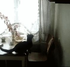 Forgot How To Cat