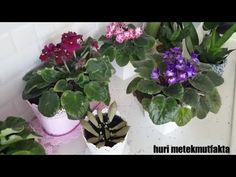 ÇİÇEKLERİ ÇOSTURAN BESİN TAKVİYESİ YUMURTAYLA huri metekmutfakta - YouTube Egg Benefits, Egg Shells, Growing Plants, House Plants, Farmer, Diy And Crafts, Projects To Try, About Me Blog, Color