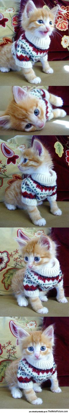 Kitty In A Sweater...Jack needs a sweater.