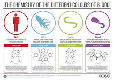 """Chemistry of Blood Colours"" Posters by Compound Interest 