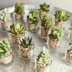 Succulents and Saturdays. Two of my fav things! What& your fav part of the weekend? Succulent Gifts, Succulent Gardening, Succulent Care, Garden Terrarium, Succulent Terrarium, Mini Terrarium, Succulents In Glass, Cacti And Succulents, Planting Succulents