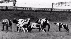 the track east Image Chart, Milton Keynes, Track, History, City, Animals, Concrete, Shop, Historia