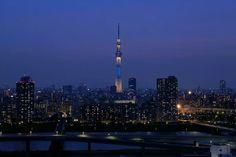 Skitree Japon