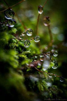 Wildlife Natural Wonders (via Water drops by Paulo Dew Drops, Rain Drops, Foto Macro, Macro Photo, Morning Dew, Water Droplets, Walk In The Woods, Natural Wonders, Belle Photo