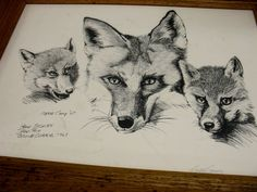 Wildlife Art, Red Fox Field Pencil Sketches, Lithograph Signed By Artist Gene Gray, Vintage Animal Graphics, Vintage 1967, No Glass
