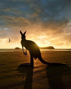 Cape Hillsborough National Park, Australia, Travel, Tourist Attraction, Sightseeing Spots, Superb Views, Beach, Ocean, Animal