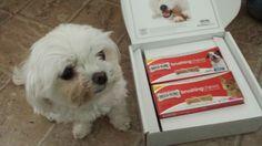 Enter to win a $25 VISA gift card and Milk-Bone Brushing Chews at Real Moms Real Views! Ends 5/11/14
