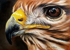 Sarah Stribbling Wildlifeart - oil paint of a eagle