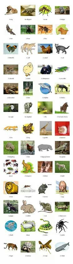 Animals vocabulary – learn the names of 50 animals English Resources, English Tips, English Idioms, English Fun, English Vocabulary, English Grammar, Learn English, Learning English Is Fun, Teaching English