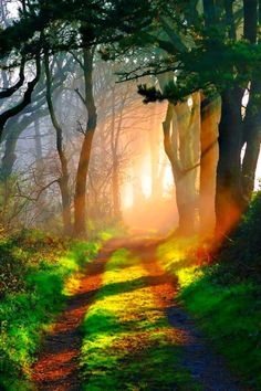 I want to get lost in the forest,, Looks dreamy forest