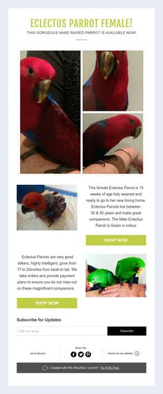 Eclectus Parrot Female! This Gorgeous Hand Raised Parrot Is AVAILABLE NOW!