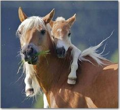 Mothers_are_awesome! So are Horses!