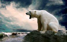 Polar Bear Wallpaper, Animal Wallpaper, Hd Wallpaper, Wallpapers, Wallpaper Pictures, Bear Pictures, Animal Pictures, Pictures Images, Polar Bear Images