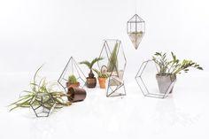 Living Room Glass - Terrariums