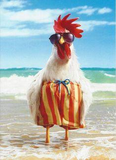 Funny happy birthday wishes animals Ideas Birthday Wishes Funny, Happy Birthday Quotes, Happy Birthday Greetings, Happy Birthday Chicken, Funny Happy Birthday Images, Birthday Humorous, Birthday Sayings, Humor Birthday, Sister Birthday