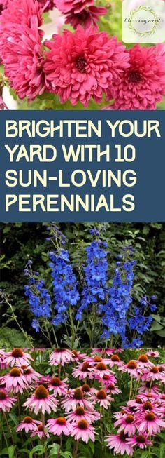 Sun Loving Perennials, Gardening, How to Garden With Perennials, Perennial Gardening TIps, Beautiful Perennials for Your Garden, Bright Perennials, Popular Gardening Pin, Easy to Grow Perennials